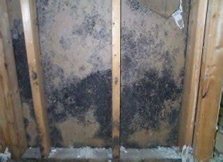 remove mold
