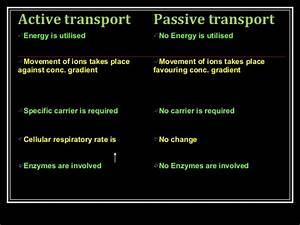 Active Transport And Passive Transport Venn Diagram