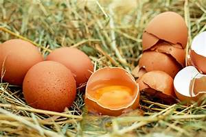 Salz Gegen Schnecken : eierschalen gegen nacktschnecken l ge oder wahrheit ~ Watch28wear.com Haus und Dekorationen