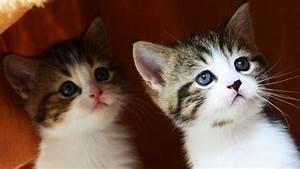 The Best Cute K... Cute Cats
