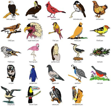 birds types inforyt unique birds pinterest bird