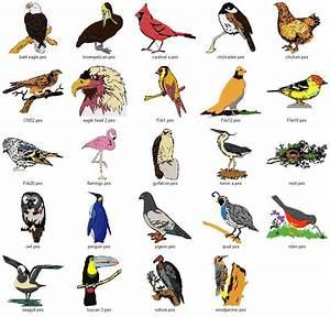 Types Of Birds – WeNeedFun