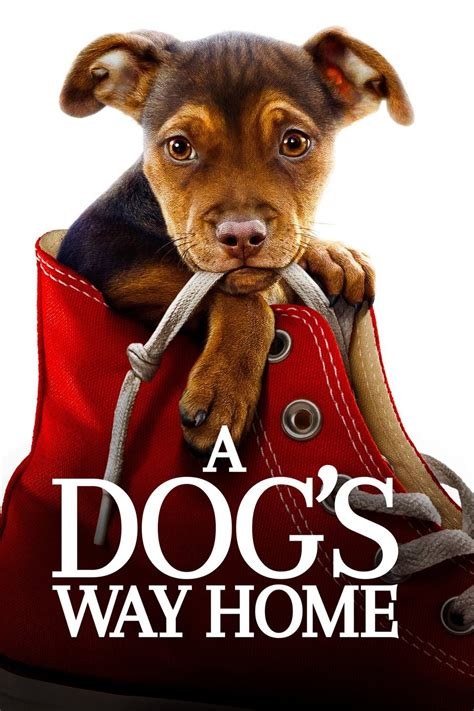 dogs  home  full   hd