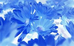 Image Gallery macro flower photography blue