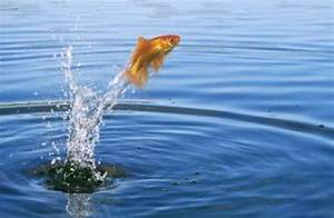 I've Never Caught a Jumping Fish