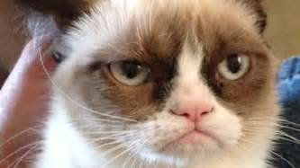 grumpy cats grumpy cat gets a deal salon