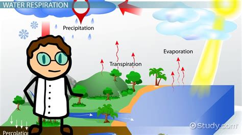 respiration   water cycle video lesson transcript