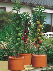 bkn strobel obst fur balkon und terrasse gawina With markise balkon mit tapeten mit obst und gemüse