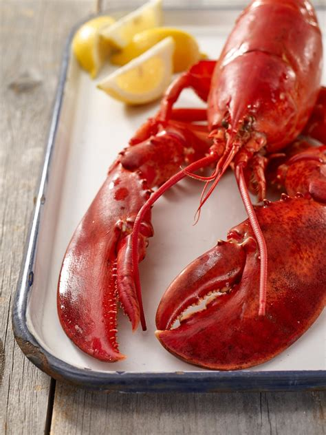 steamed lobster cooking tips lobster  maine