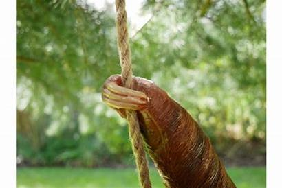Sloth Garden Steve Hanging Pre Order Ornaments