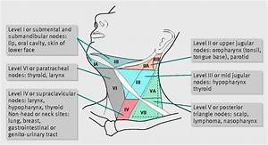 Lymph Node Groups Of The Head And Neck Region With Respective Draining Areas U2014from Our Practice