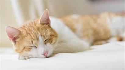 Sleeping Cat Desktop Backgrounds Android Iphone