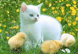 Cool HD Nature ... Cute Animals
