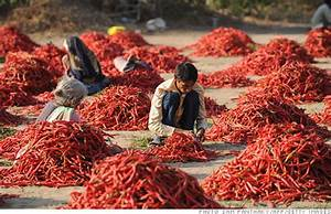 India's GDP growth slows sharply - May. 31, 2012