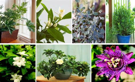fragrant houseplants fragrant flowers and plants for heavenly scented home