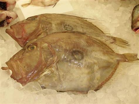 john dory santa monica seafood
