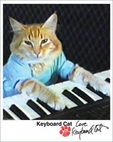 keyboard cat catsparella pawtographed keyboard cat pics hit the