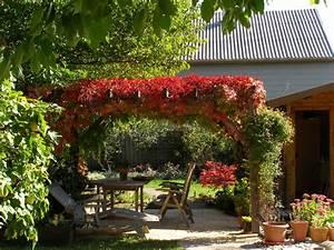 Pflanzen Für Pergola : rankpflanze f r pergola rasen pflanzen und kr uter pflege bauen und wohnen in der schweiz ~ Sanjose-hotels-ca.com Haus und Dekorationen