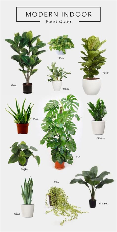 Images Of Living Room Plants by Decorating With Nature Houseplants Living Room Plants