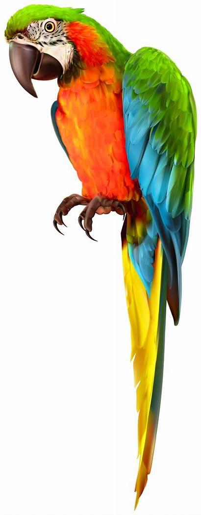 Transparent Parrot Birds Clipart Clip Yopriceville Bird