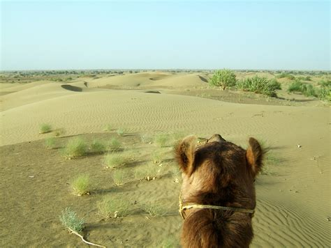 thar desert asisbiz travel photo alblum of camel safari thar desert