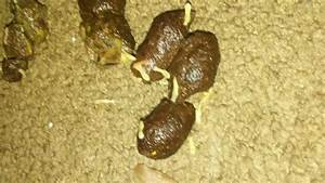 Flat Worms In Dog Poop Pictures to Pin on Pinterest ...