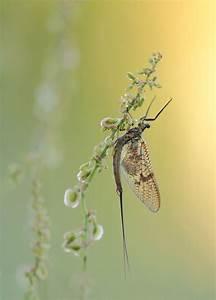 Der Schönste Tag : der sch nste tag im leben einer eintagsfliege forum f r naturfotografen ~ Heinz-duthel.com Haus und Dekorationen