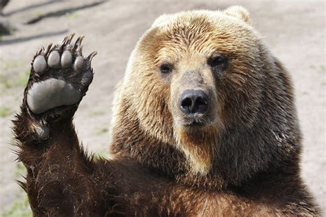 What Does Bears Eat
