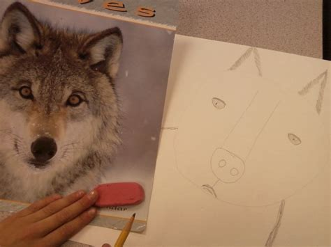ppps elementary art rooms realistic animal drawings