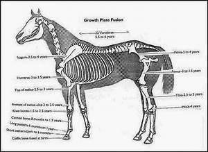 Kia Herold  Anatomia