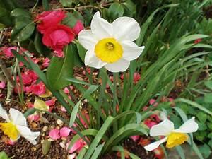Was Sind Frühlingsblumen : fr hlingsblumen foto bild pflanzen pilze flechten natur bilder auf fotocommunity ~ Whattoseeinmadrid.com Haus und Dekorationen