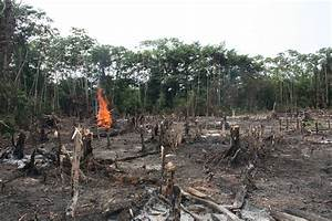 Why deforestation | The bloomtrigger blog...