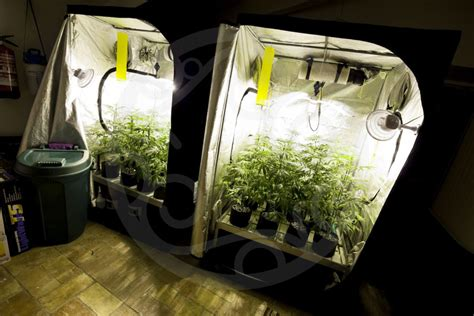 equipement culture cannabis interieur bases essentielles pour culture de cannabis en int 233 rieur philosopher seeds