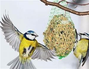 Singvögel Im Garten : futterstelle ~ Whattoseeinmadrid.com Haus und Dekorationen