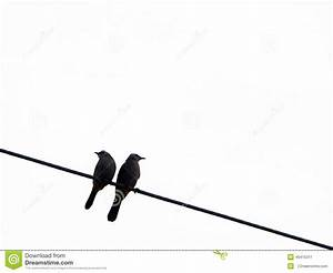 Two Birds On A Wire Silhouette