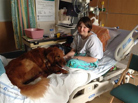 therapy dog brings healing  patients  staff