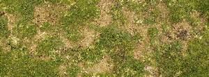 refaire sa pelouse en automne With maison humide que faire 7 semer de la pelouse