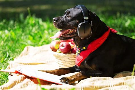playlists  pups   songs  happiness health