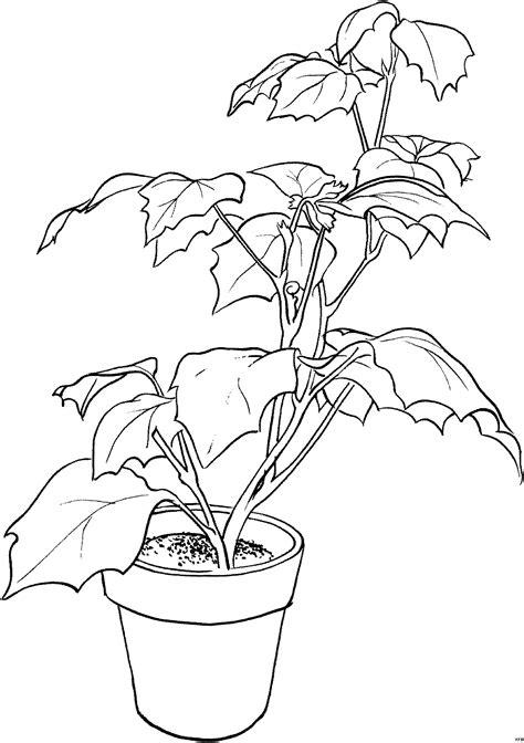 pflanze ausmalbild malvorlage blumen