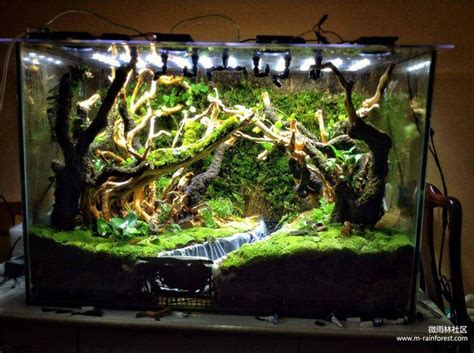 best 25 vivarium ideas only on plant fish tank fish tank and aquarium ideas