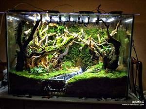 Süßwasserfische Fürs Aquarium : die besten 25 vivarium ideen auf pinterest aquarium ~ Lizthompson.info Haus und Dekorationen