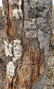 Achat Tronc Arbre Decoratif : banque d 39 image tronc d 39 arbre corce rong e par le temps ~ Zukunftsfamilie.com Idées de Décoration