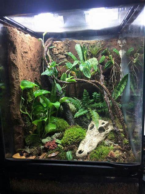 images  crested geckos vivariums