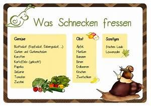 Was Fressen Schnecken : krabbelwiese im ruhemodus schneckerei in der schule ~ Orissabook.com Haus und Dekorationen