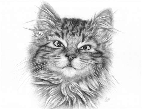 Tabby Kitten Drawing By Heather Page