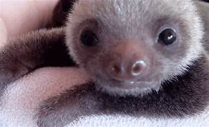 Baby Sloth Should Be Writing GIF - Find & Share on GIPHY