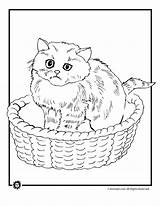 Cat Coloring Basket Sleeping Cartoon Pages Kitten Print Activities Printer Animal Popular Send Button Special Only sketch template