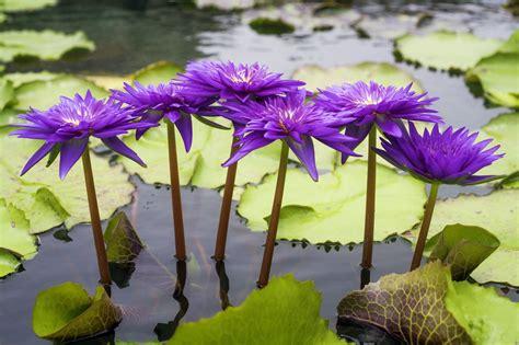 Water Flower Names