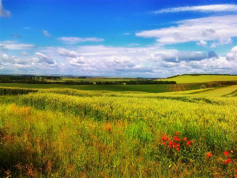 picture landscape field rural nature rapeseed