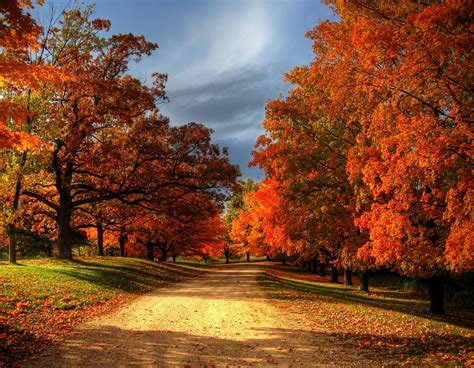 trees with fall color quotes about fall colors quotesgram